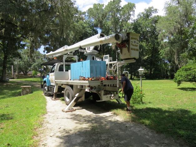 Diamond Tree Service
