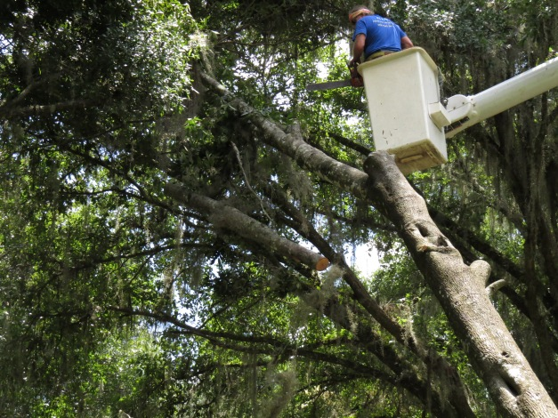 Diamond Tree Service
