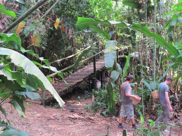 Hacienda Guayabal, Colombia