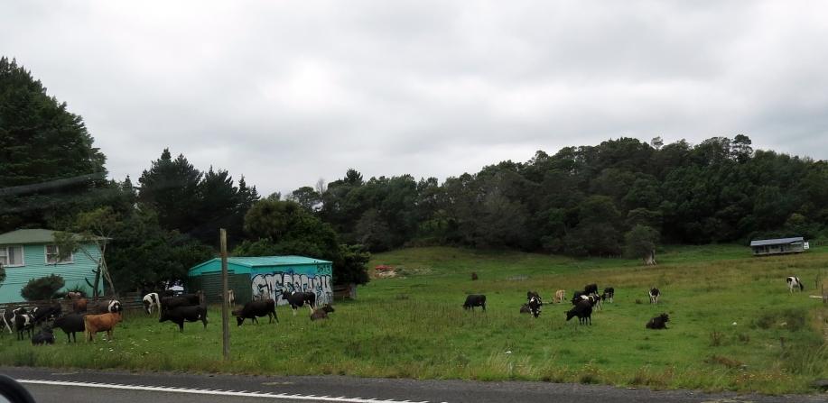 Fra Auckland til Whakatane